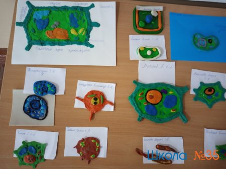 """Выставка по биологии """"Строение клетки"""" 5-е классы"""